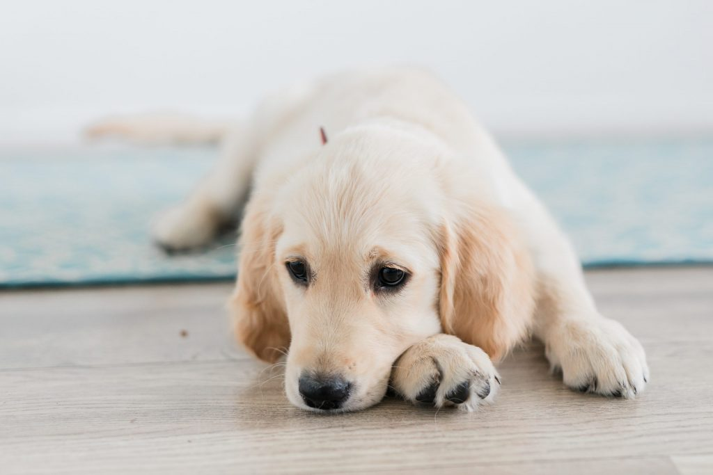 fotoshoot met puppy